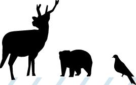 信州・蓼科生まれの天然狩猟肉・鹿(しか)肉|蓼科(たてしな)ジビエ|私たちのお店