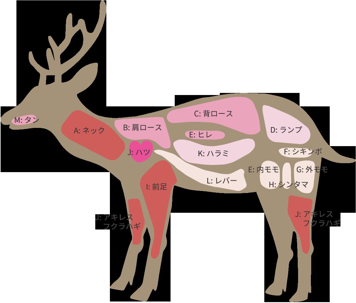 信州・蓼科生まれの天然狩猟肉蓼科(たてしな)ジビエ|シカ部位説明